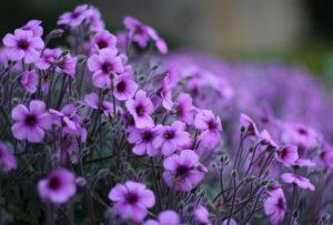 Цитаты про цветы