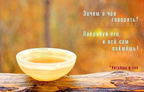 чашка чая кэтрин мэнсфилд краткое содержание